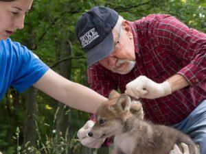 sanctuary vet donation